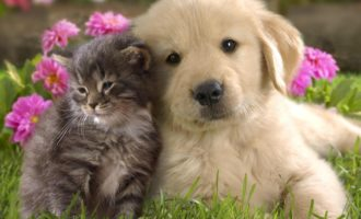 Cute-Puppies-And-Kittens-Together-Wallpaper